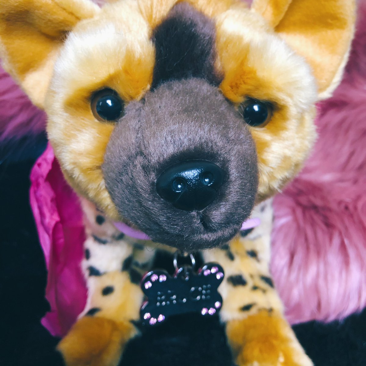 Clarisse Loughrey On Twitter I Am Now One Step Closer To My Dream Of Becoming A Hyena Mom Birdsofprey
