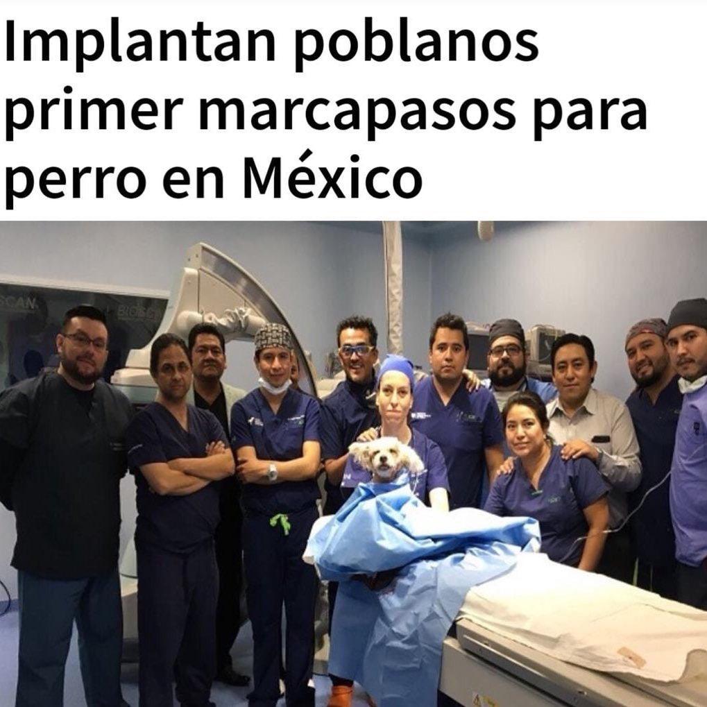 Perrita recibe primer implante de marcapasos en México