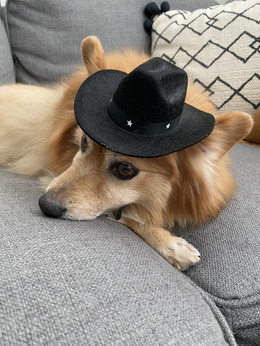 What in tarnation?