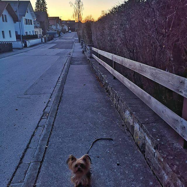 Toller Abend Himmel . . . #miro #himmel #sky #herzaufvierpfoten #yorkie #yorkshire #yorkshire_terrier #petstagram #hund #dog #dogstagram #dogoftheday #yorkshireterrier #dogsofinstagram #yorkiesofinstagram #terrier #yorkiegram #instadog #littledog #instay… https://ift.tt/388Q7Inpic.twitter.com/ovUyh4K48E