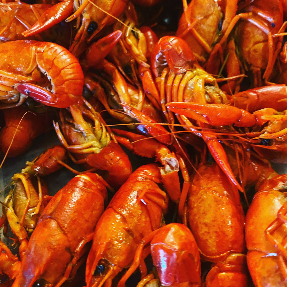 'Tis The Season..... #Mudbugs coming on strong down on #TheBayou ..... #GetYouSome #crawfish