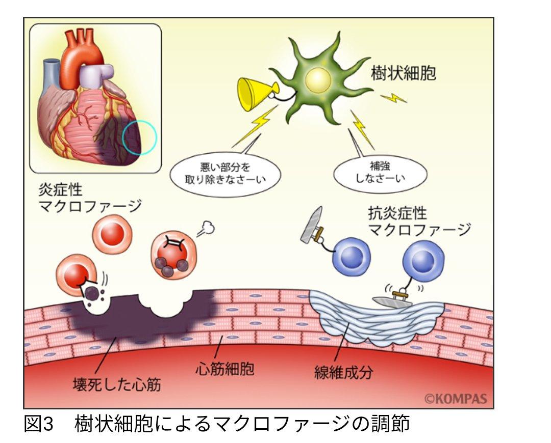 新型 コロナ 白血球