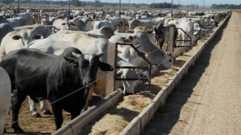 Integração Lavoura Pecuária e terminação em confinamento garantem eficiência na recria de bovinos de corte, aponta estudo da Embrapa  Saiba mais:  https://www.norteagropecuario.com.br/noticias/orientacao-especialista-recria-bovinos/… #NorteAgroTO #agropecuária #agronegócio #pecuária #bovinos #gado #pecuariadecorte @embrapa #ILP @embrapapic.twitter.com/QC9cm4PUaH