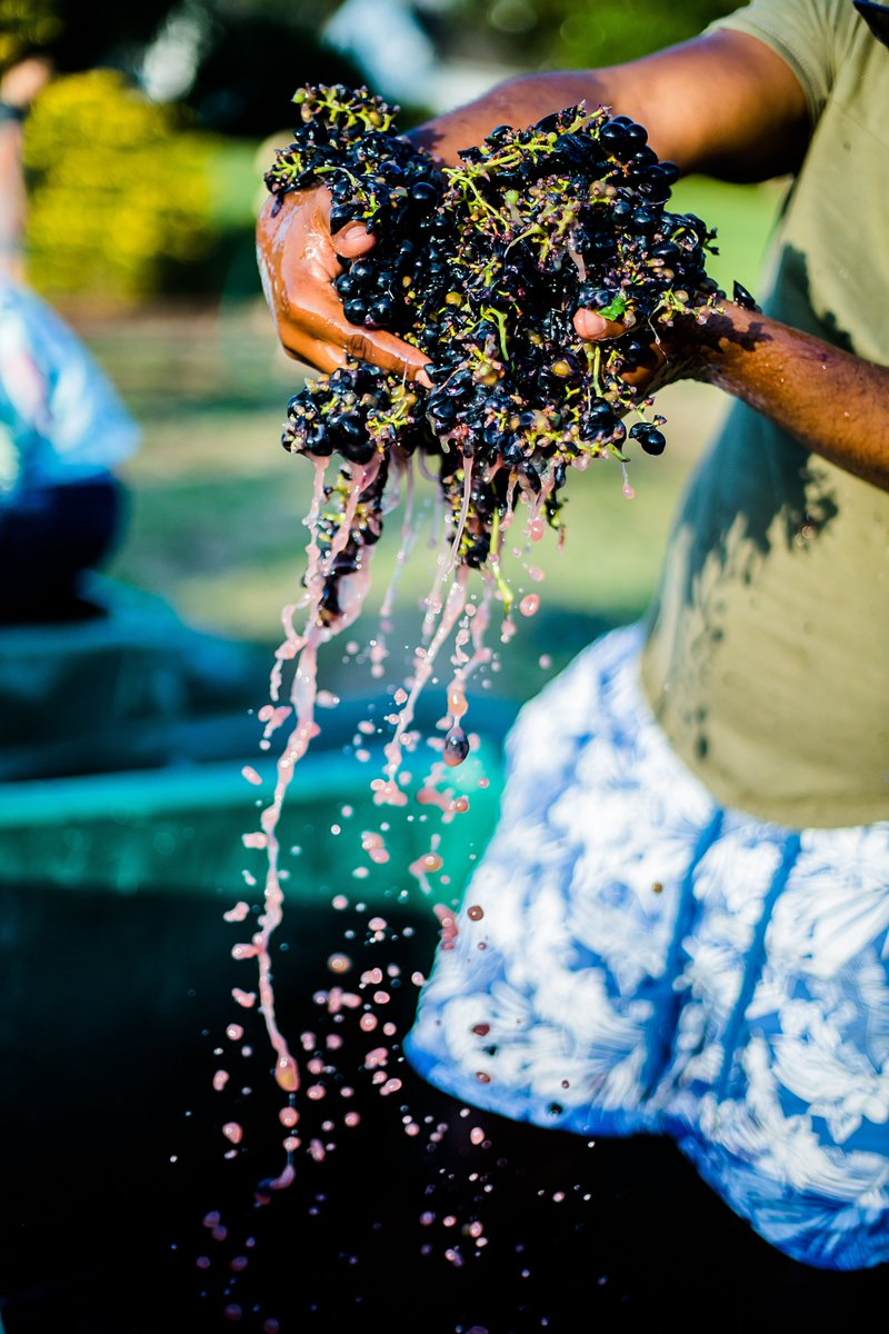 Counting down the hours to SIPping, SAVOURing, SNIPing AND SQUASHing! This is a fabulous day for our #Harvest2020 at Dusk Festival!