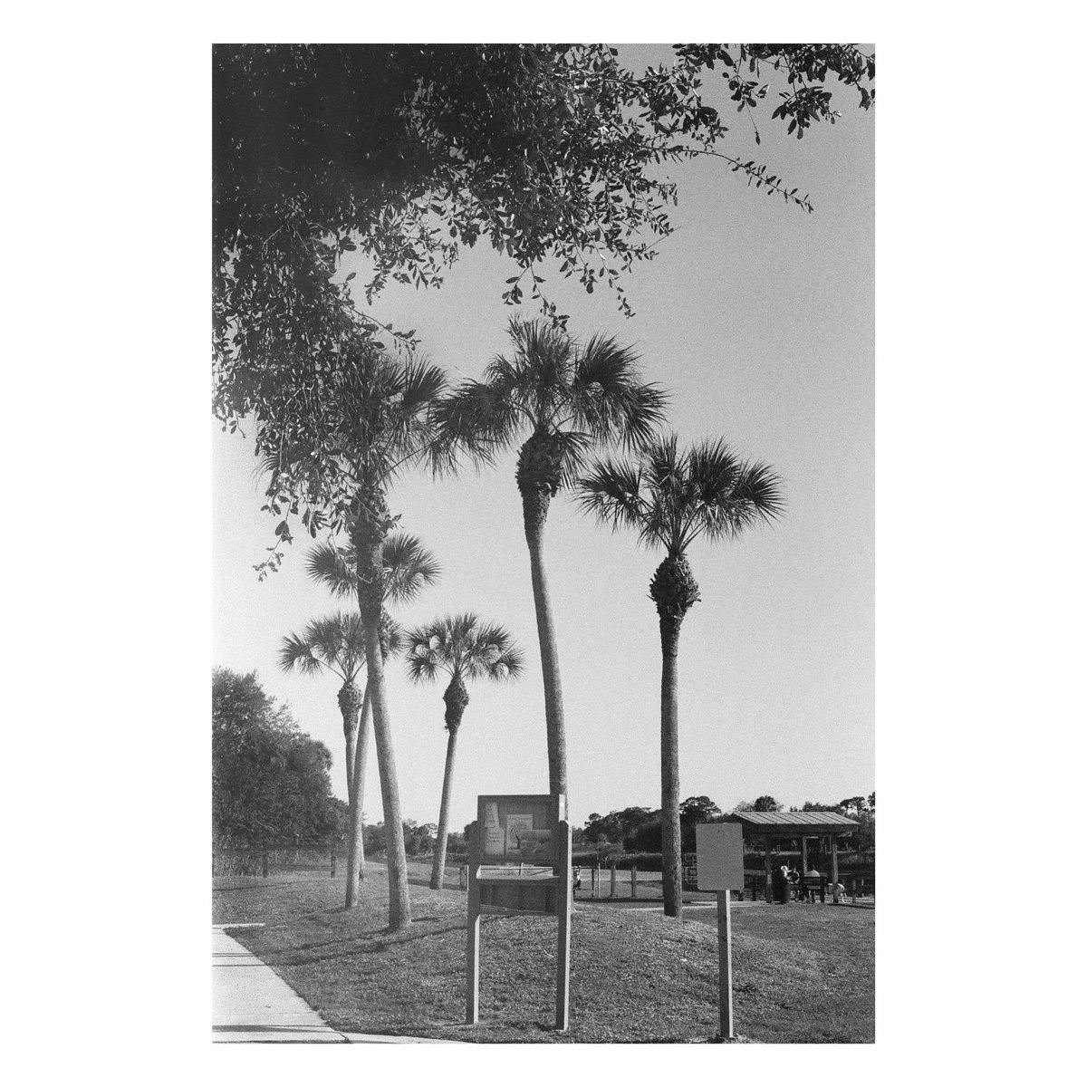 Oak Hammock Park Canon FTb  Kodak TriX 400 #istillshootfilm #thefilmcommunity #35mm #analogfeatures #filmisalive #filmisnotdead #AlysVintageCameraAlley #boxspeed #filmPhotography #filmphotographyProject #blackandwhitephotography #womenwithanalogcameras #filmshooterscollective pic.twitter.com/3ZcRfiJZ9N