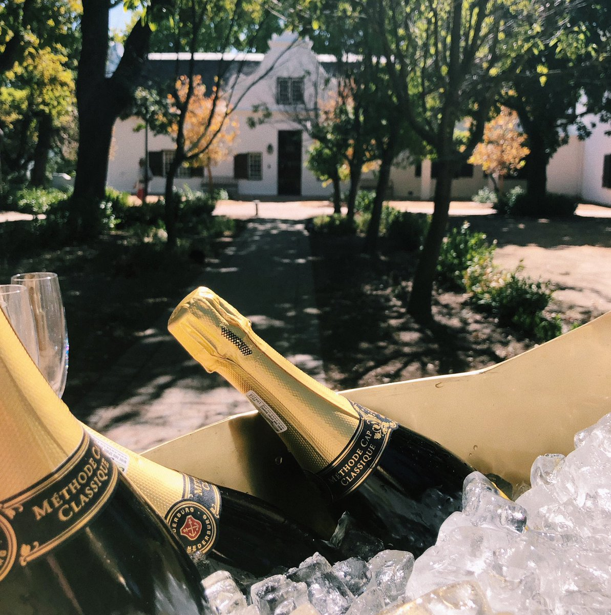 It isn't #Harvest2020 without a bit of bubbly to go around. Let's get the Harvest at Dusk Festival started 🥂