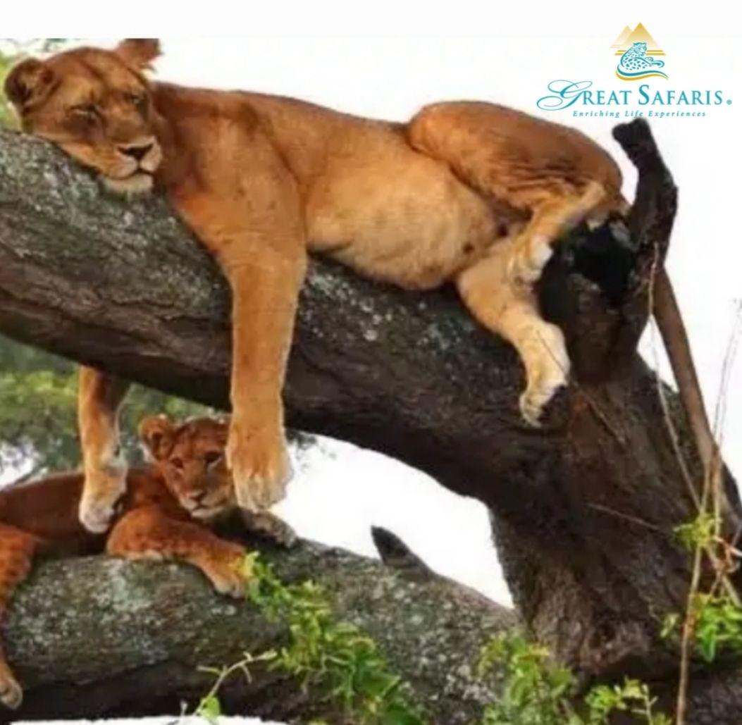 That Saturday feeling. #greatsafaris #weekendvibes #africa #safaritour pic.twitter.com/uBEbk4g1x6