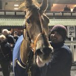 Watchable having the last laugh! Comfortable win under @shanefifigray @WolvesRaces this eve despite being the outsider of the lot! Well done to all connections & credit to the @omeararacing team #legend #bouncingback #firstwinof2020 🤩🥇🥂🍾