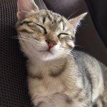 ペットを金額で判断する残念な考え・拾った猫も同じ命・可愛いに値段は関係ない!