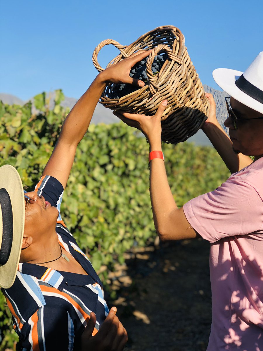 | NEDERBURG HARVEST AT DUSK FESTIVAL | 🍇🍇🍇   I don't want to brag, but WOW!😄🍷 From tractor rides to the Vineyards, picking grapes and stomping! What a phenomenal experience   #NederburgHarvestFestival  #Harvest2020  #Harvest