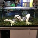 怖すぎ!どんなに綺麗な魚が泳いでいても癒されない水槽レイアウトが発見される!