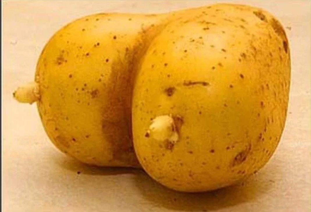Sex potato sex potato bottom text