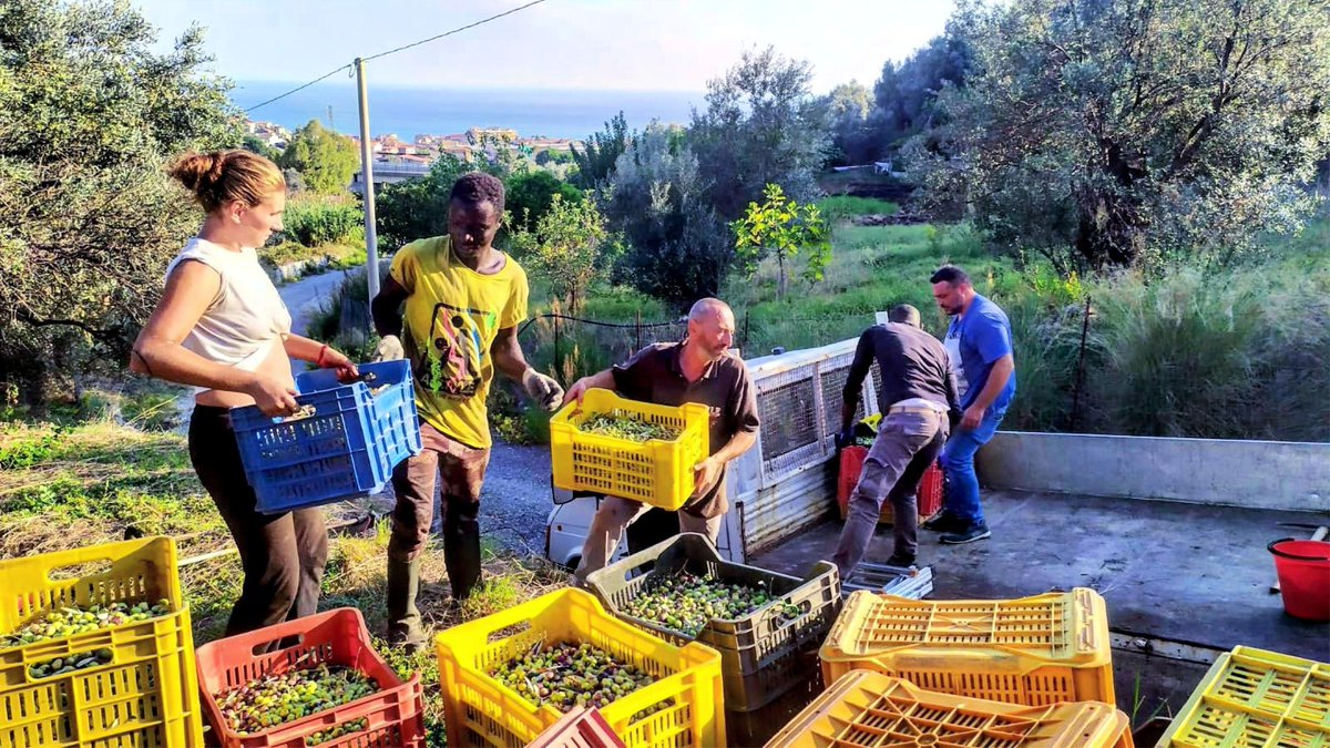 Cooperative in Calabria Offers Much More Than Good Olive Oil buff.ly/2v85nXc @oliveoiltimes