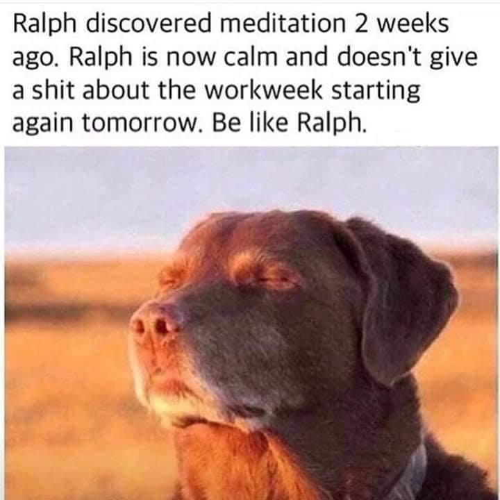 Be like Ralph!  Ohhhmmmm.......  http://bit.ly/AngryZen  #yoga #yogapants #yogapractice #yogainspiration #zen #meditate #letitgo #yogaeverydamnday #yogaposes #inthemoment #introvert #justbreathe #yogaclothes #yogawoman #yogaforlife #buddha #HSP #dogs #dogslifepic.twitter.com/PisalHI27a