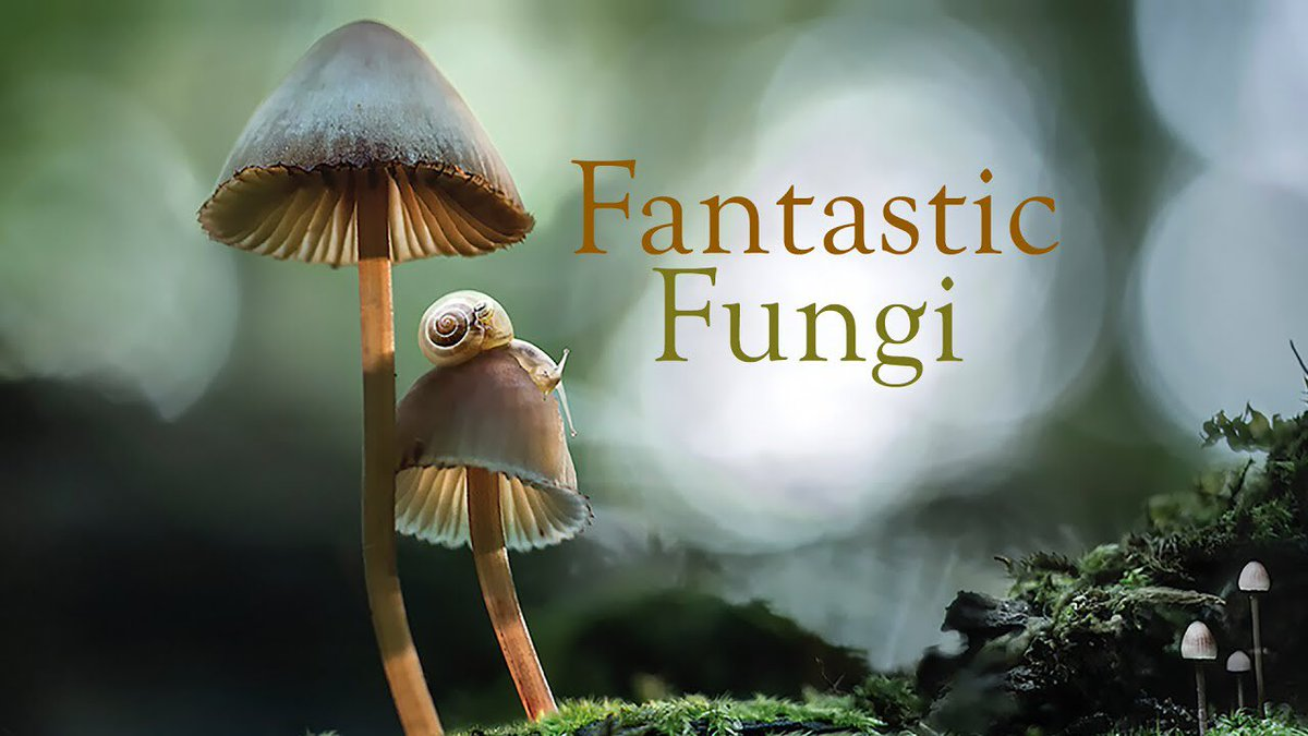 Scott J Davidson On Twitter The Ecologist In Me Just Won Some Free Tickets To Fantastic Fungi For Being Able To Correctly Pronounce It I Was All Ready To Spell
