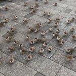 ベンチで肉まんを食べてた結果?雀が大量によってきた!