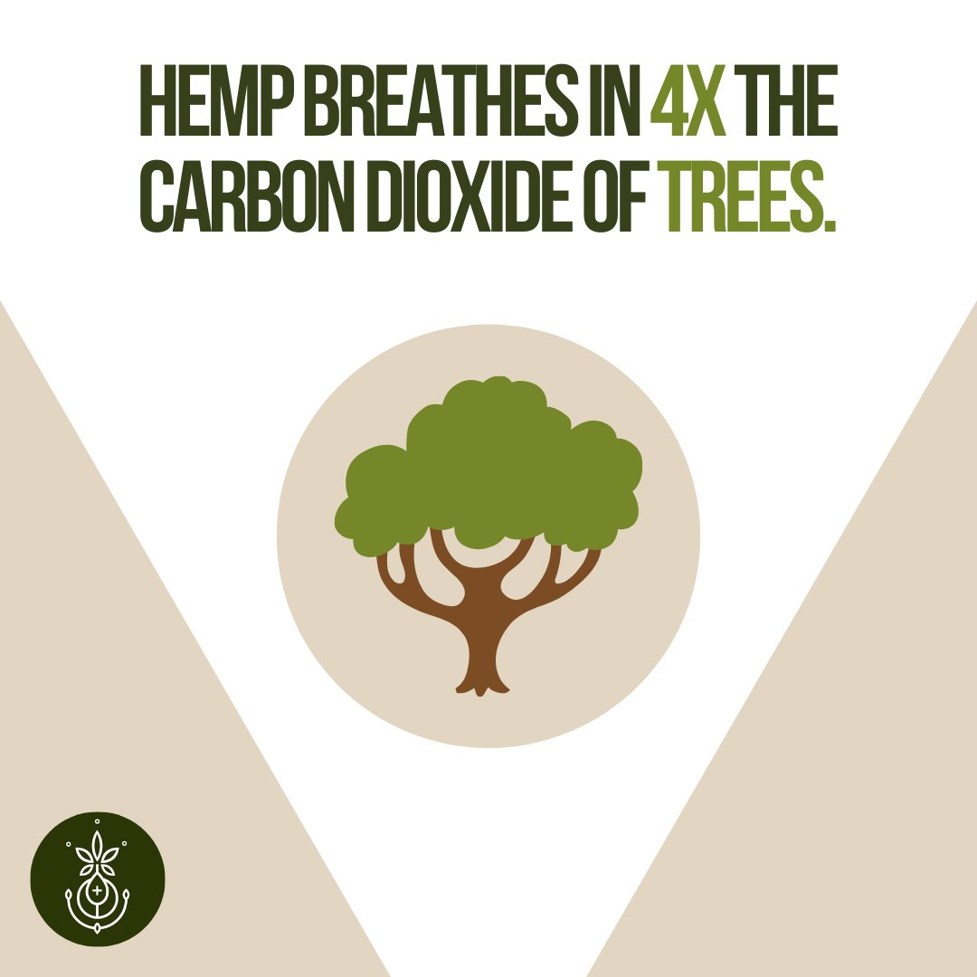 It's absolutely incredible all the things Hemp can do! Did you know that one acre of Hemp can produce more oxygen than 25 acres of forest? Why aren't we planting more Hemp? It would mean more CBD, after all! #hemptrees #hempplant #cbdwellness #cbdlove #cbdhemp #cbdflowerspic.twitter.com/637xnlJREJ