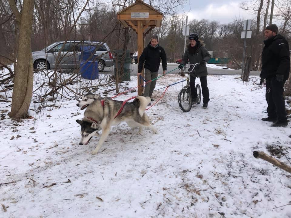 Sled Dogs #dogtraining #dogsports #mydogs