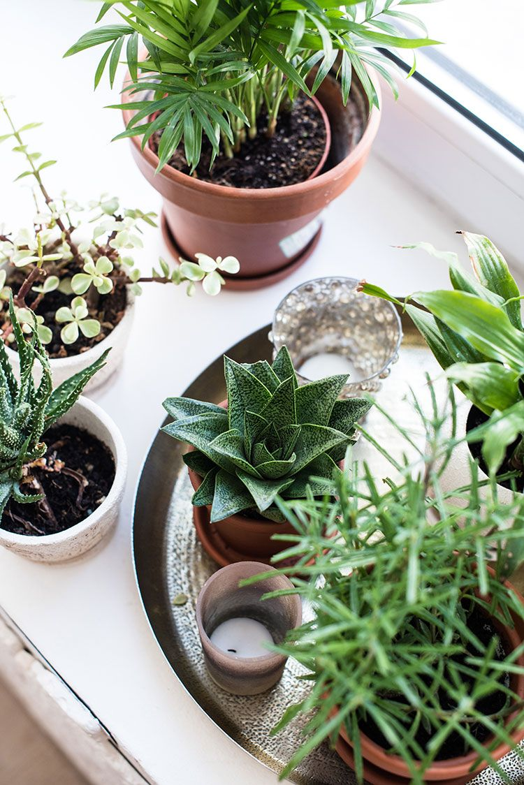 How to Buy Plants Online + My Fave Sources to Shop: jojotastic.com/2020/02/17/buy…
