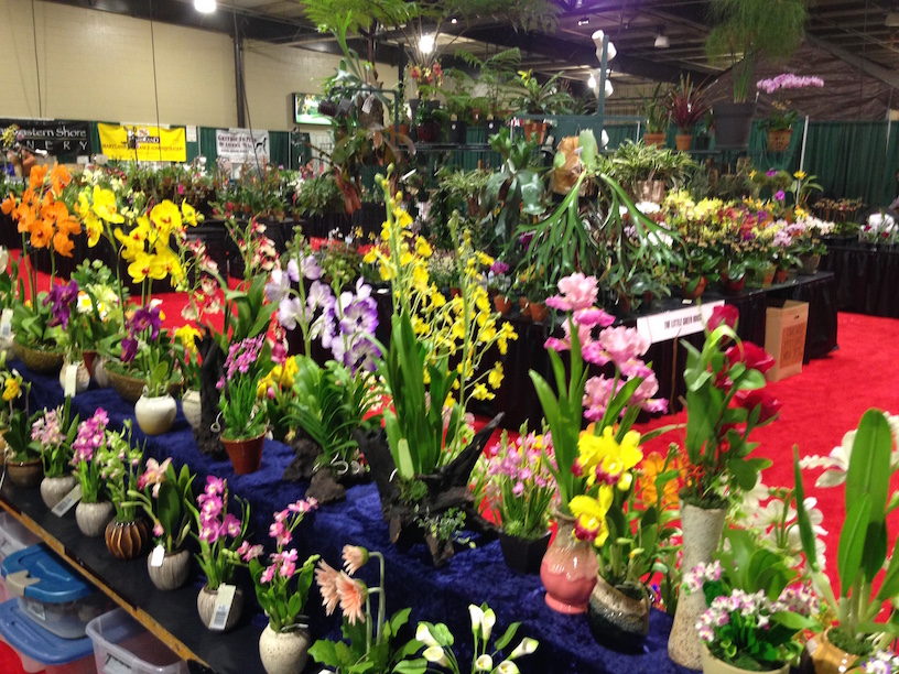 #entertowin a pair of tickets for the spring @MDHomeandGarden Show. #MarylandMondays contest runs through February 23. Must be 18+ to enter. Winner notified via email. https://t.co/gxiKJBK8BU https://t.co/eZ7t7de1j0