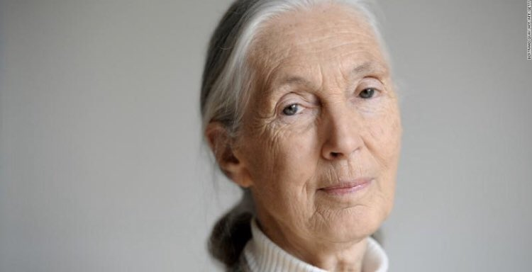 In these 'very dark times,' Jane Goodall explains why she is still hopeful edition.cnn.com/2020/02/15/wor… @JGIBelgium