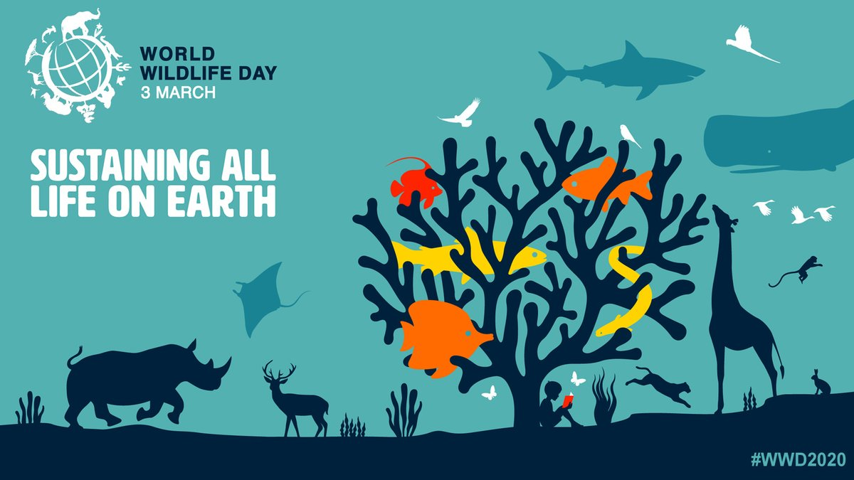 Unsustainable human activity is taking a toll on the worlds #biodiversity, of which wild animals & plants are an essential component. This #WorldWildlifeDay, let us come together to create a world that can truly #SustainAllLife on Earth wildlifeday.org #WWD2020 #SDGs