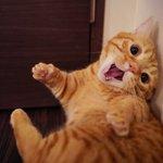 猫を追い詰めた結果?すごい顔しちゃった!