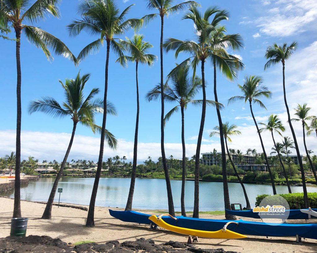 アロハストリート On Twitter 今週のハワイの壁紙 気持ちの良い青空