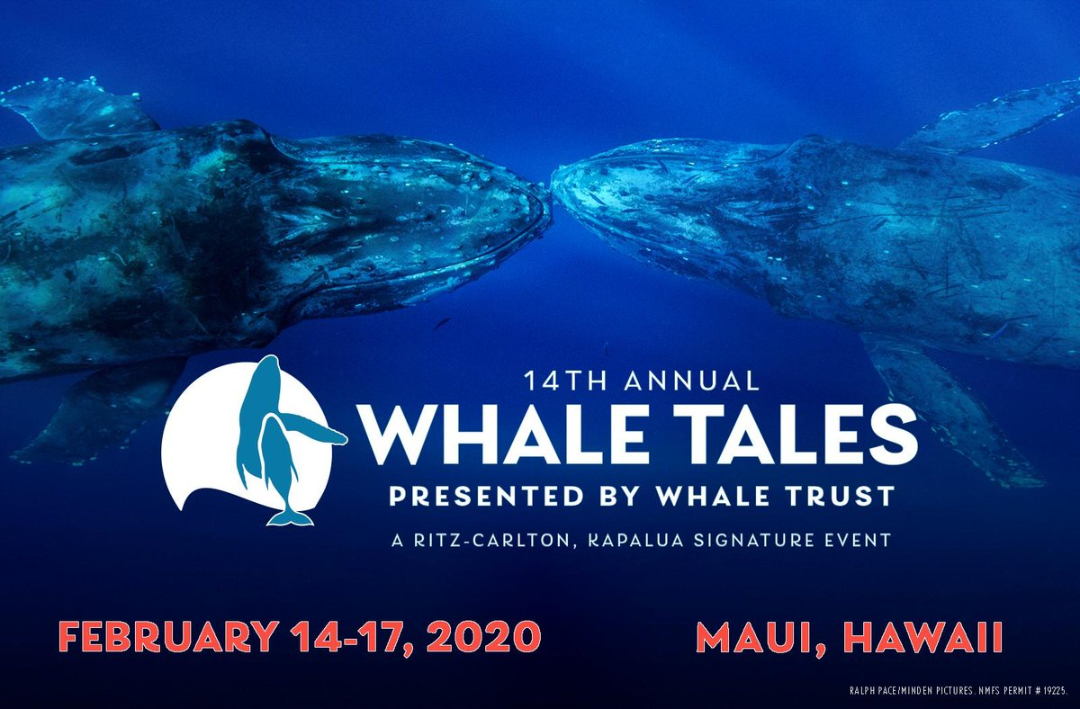 Whale Tales is an annual 4-day event on #Maui that brings together marine experts with thousands of residents & visitors. Scientists, photographers, and conservationists join the public for a memorable weekend of engaging talks and exciting whale watches. #Kapalua @RitzCarlton https://t.co/X7coNkwqCe