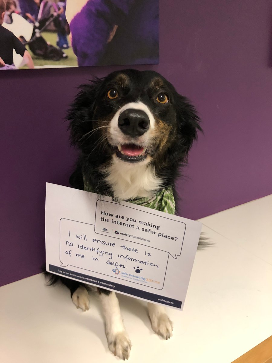 Replying to @alannahmadeline: We think these are paw-fect.🐶 #SaferInternetDay #SID2020