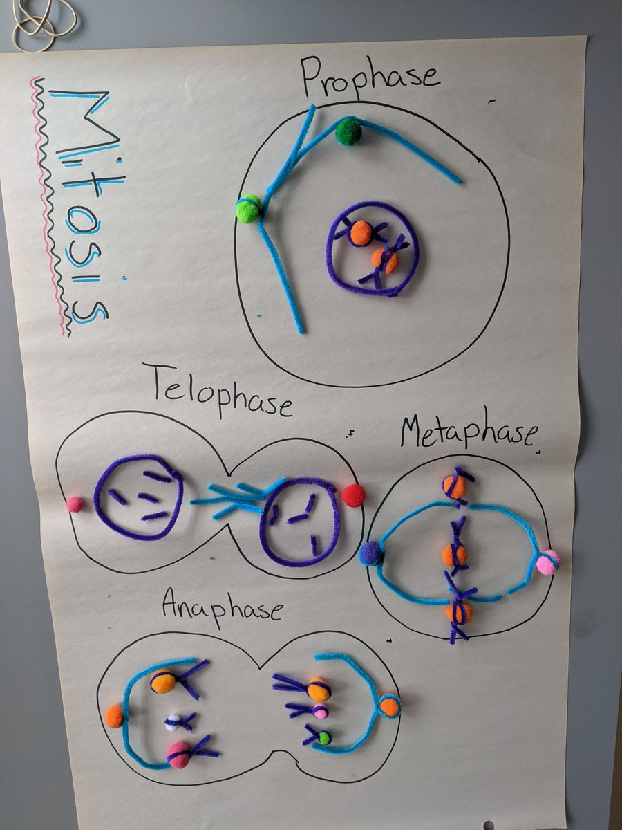 We made mitosis today! #ocdsbxl