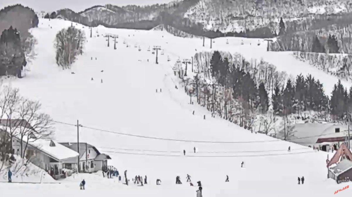 場 ライブ ハチ 高原 カメラ スキー