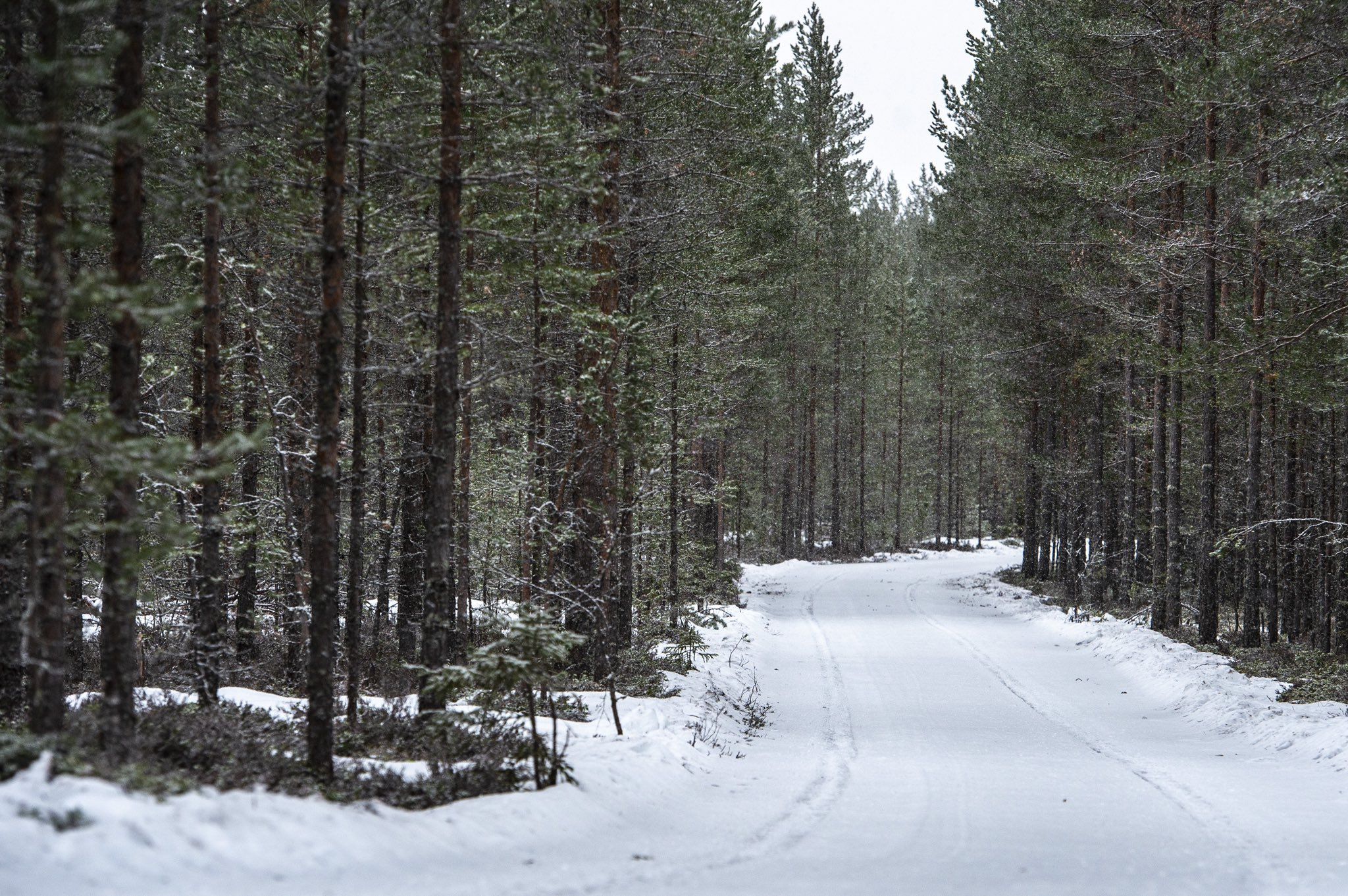 WRC: 68º Rallye Sweden [13-16 Febrero] - Página 2 EQkKK9bWsAA5GVq?format=jpg&name=4096x4096