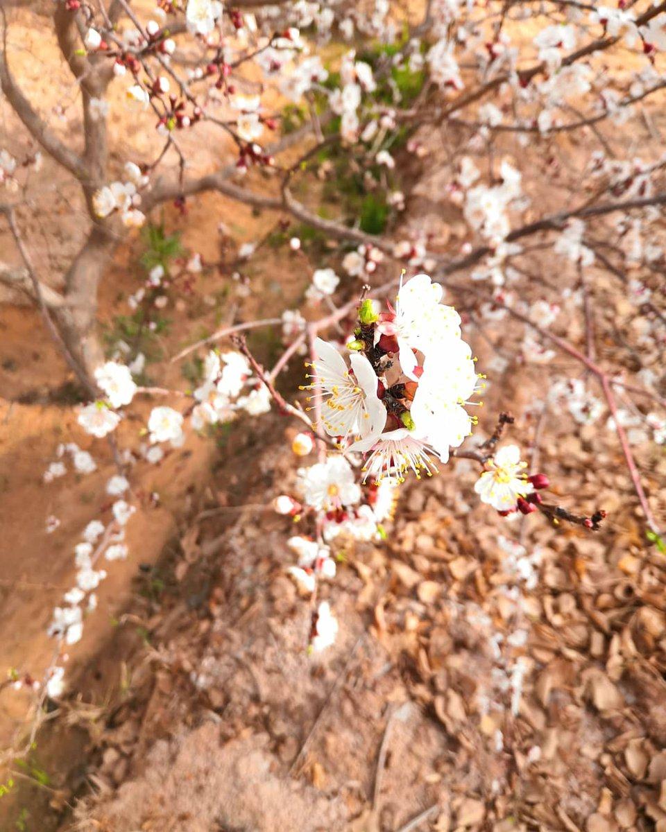 pomegranate tree  By : me  #photooftheday #honr_play #phonephotography #mobileshot #nature #natureperfection #naturephotography #eloued #elmeghaie #algeriarpic.twitter.com/IP4uQoxOCz