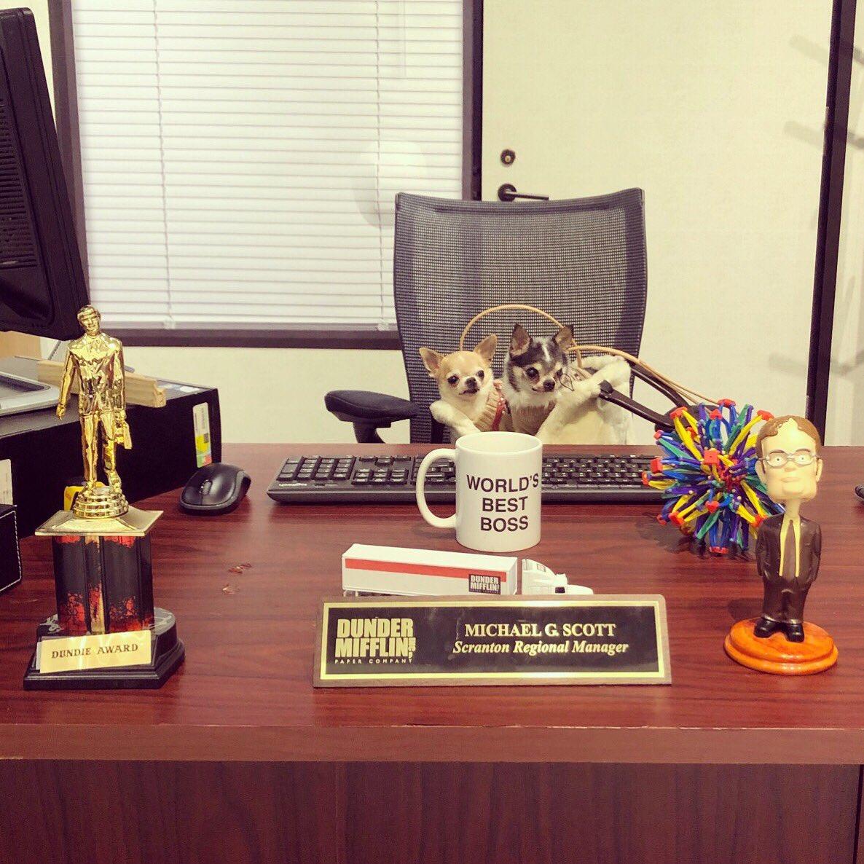 Introducing Dunder Mifflin's new Barketing Coordinators #ShopAtNBC #TheOffice #WorldsBestBoss
