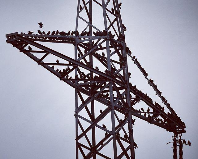 Gemeinsam schläft es sich besser. In der Berghütte nennt man das Matratzenlager #birds #vogel #vogelfotografie #birdphotography #blackandwhite #schwarzweiss #monochrome https://ift.tt/39vWEgspic.twitter.com/cpwyxIpUxe