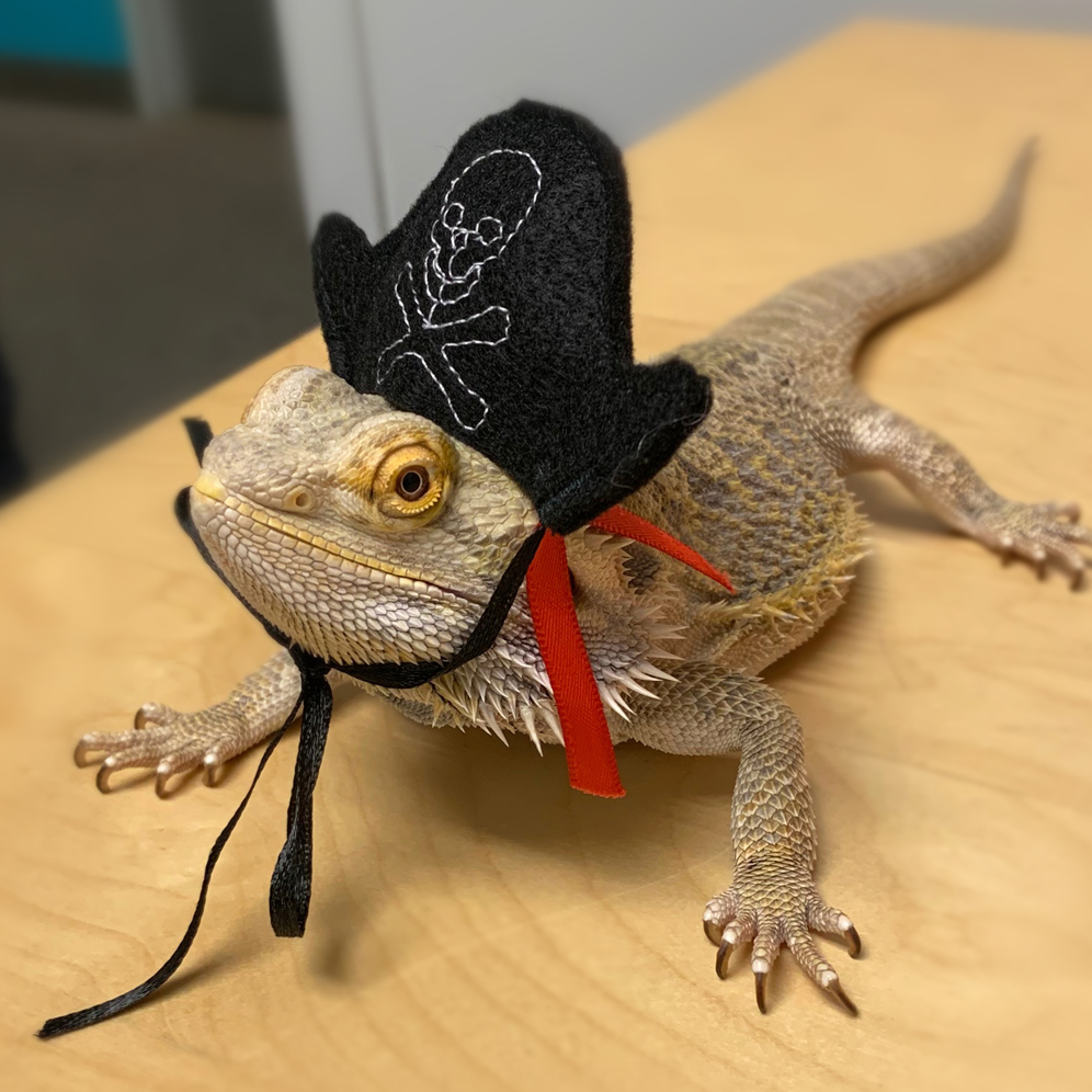 Guess who is coming to SEA LIFE this Marrrrrrrrch?  Learn more and buy tickets: http://visitsealife.com/minnesota/discover…  #beardeddragon #PiratePartypic.twitter.com/AXwBZXmD3V