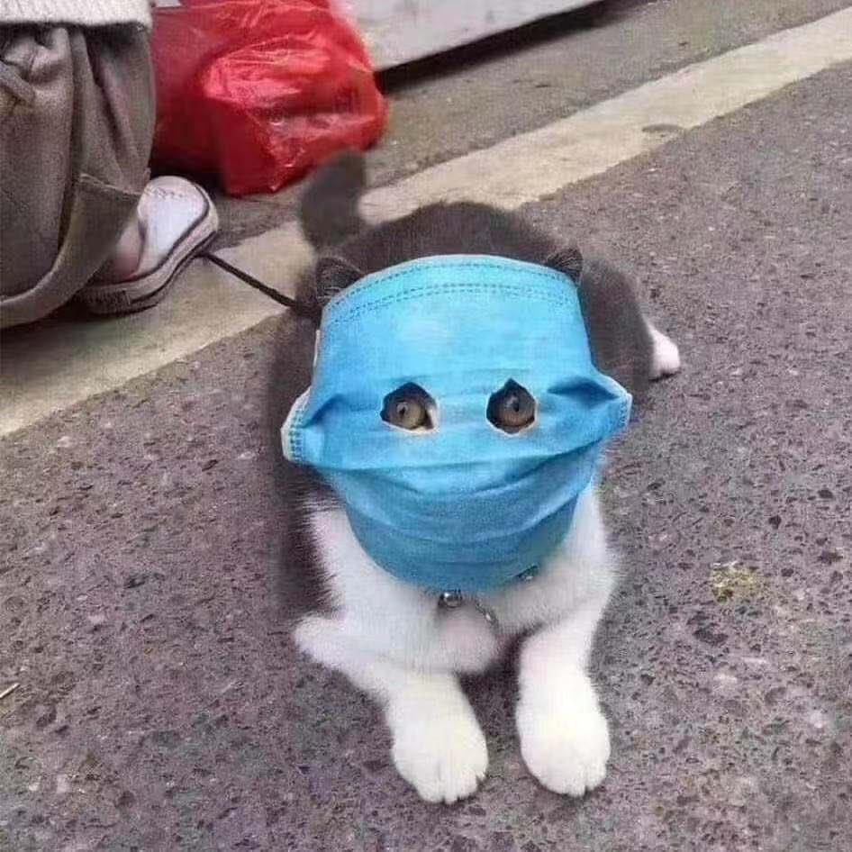 マスク 中国