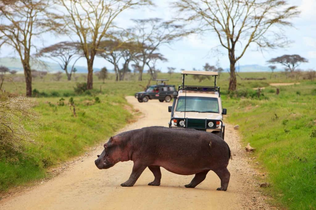 Did you know that the hippopotamus, the second largest mammal is a great swimmer? Watch them in Retina Pool of the Central Serengeti. https://antelopesafaris.com/destinations/serengeti-national-park/… #Hippo #Wildlife #Serengetinationalpark #Antelopesafaris #Safaritour #Tanzaniasafari #Wildlifesafari #Tanzaniapic.twitter.com/Vj2j7nvjTQ