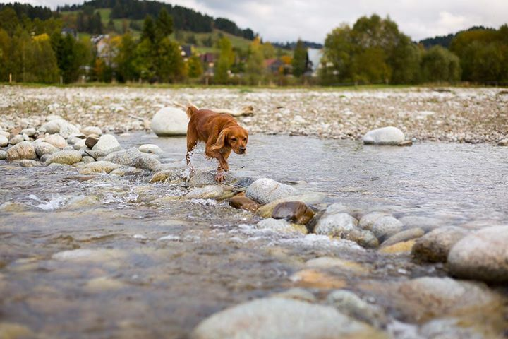 Crossing the river like a boss... • • • • • #dogsofinstagram #hikingdogsofinstagram #hikingdogsofinsta #hikingwithdogs #explorewithdogs #dogsthathike #dogsonadventures #thegreatoutdogs #backcountrypaws #mountainlife #adventurewithdogs #adventuredogsofficial #adventurepup… pic.twitter.com/KUUUDrOnke