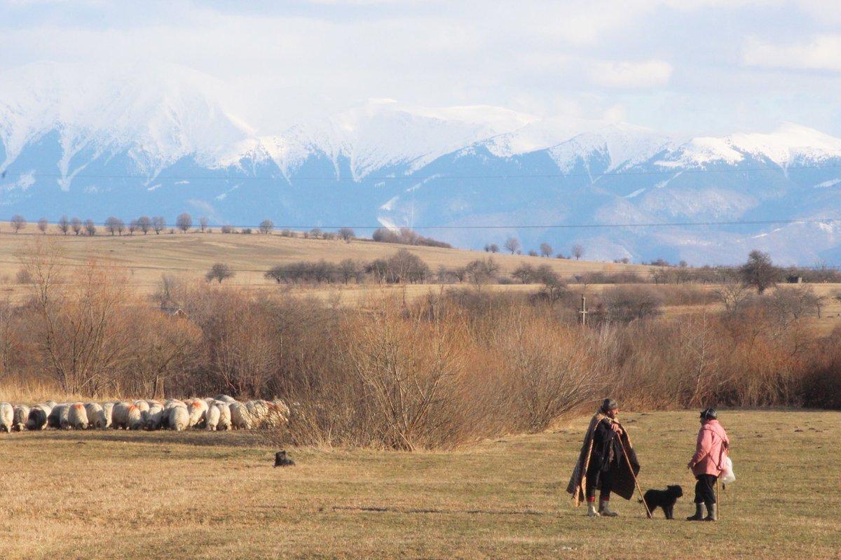 Shepherds having a chitchat in Sibiu County, Romania.  https://www.instagram.com/p/B8gGqaaoE9h/?igshid=4nhyp1a5yybl…pic.twitter.com/wcII2ZcGV1