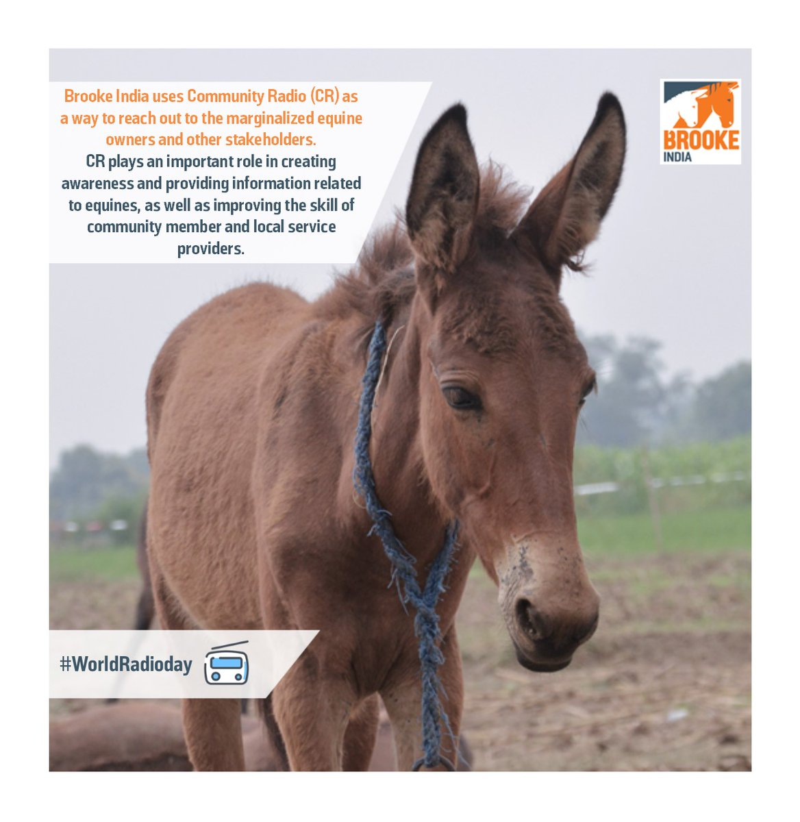 Happy World Radio Day !! @TheBrooke  #BrookeIndia #EquineHealth #Animal #Welfare #Equinewelfare #EquineCharity #NGO #Livelihood #Theoryofchange #Community #Resilience #Compassion #Equine #Sustainability #Support #WorldRadioDay2020pic.twitter.com/J8e8eG2IZ7
