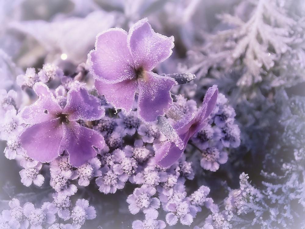 картинки красивые цветы и лед самодельные тракторы двигателем