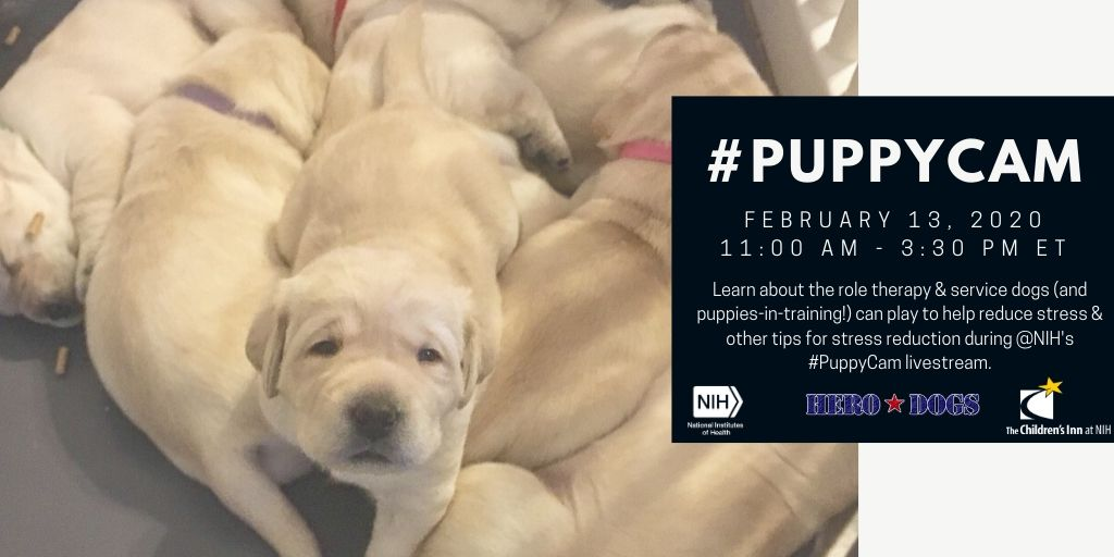 Who doesn't want to see adorable puppies? You can starting soon at 11 AM ET! #PuppyCam #ThursdayThoughts