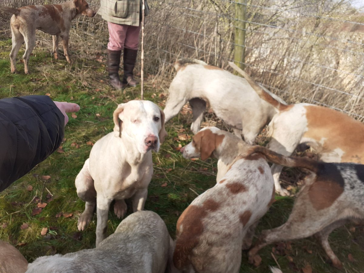 2 hunts packed by 2pm Meynell hunt packed after rioting through a village