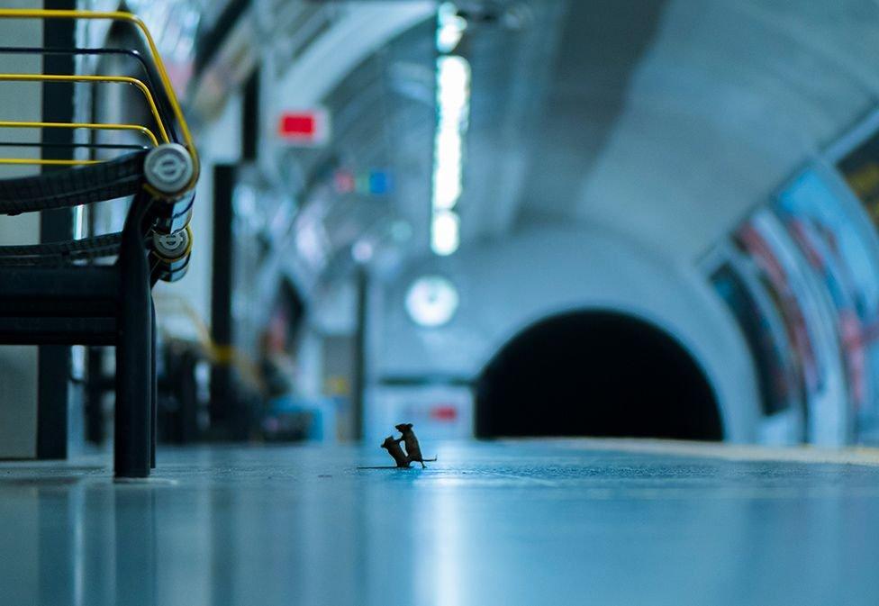 La fotografía del año en la categoría Vida Silvestre por LUMIX #SeEstánPeleando #LondonSubway