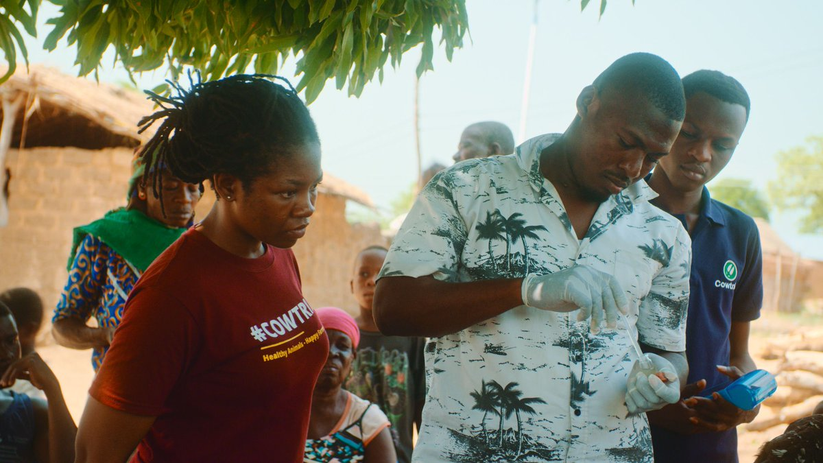 Meet Alima and Peter, founders of @CowTribe, an #agritech startup from Ghana, who created a solution that helps African farmers vaccinate their animals on time and prevent stock loss.   Read the story here https://buff.ly/2Re3IH5  #entrepreneurship #africanstartups pic.twitter.com/JZRChf4VtM