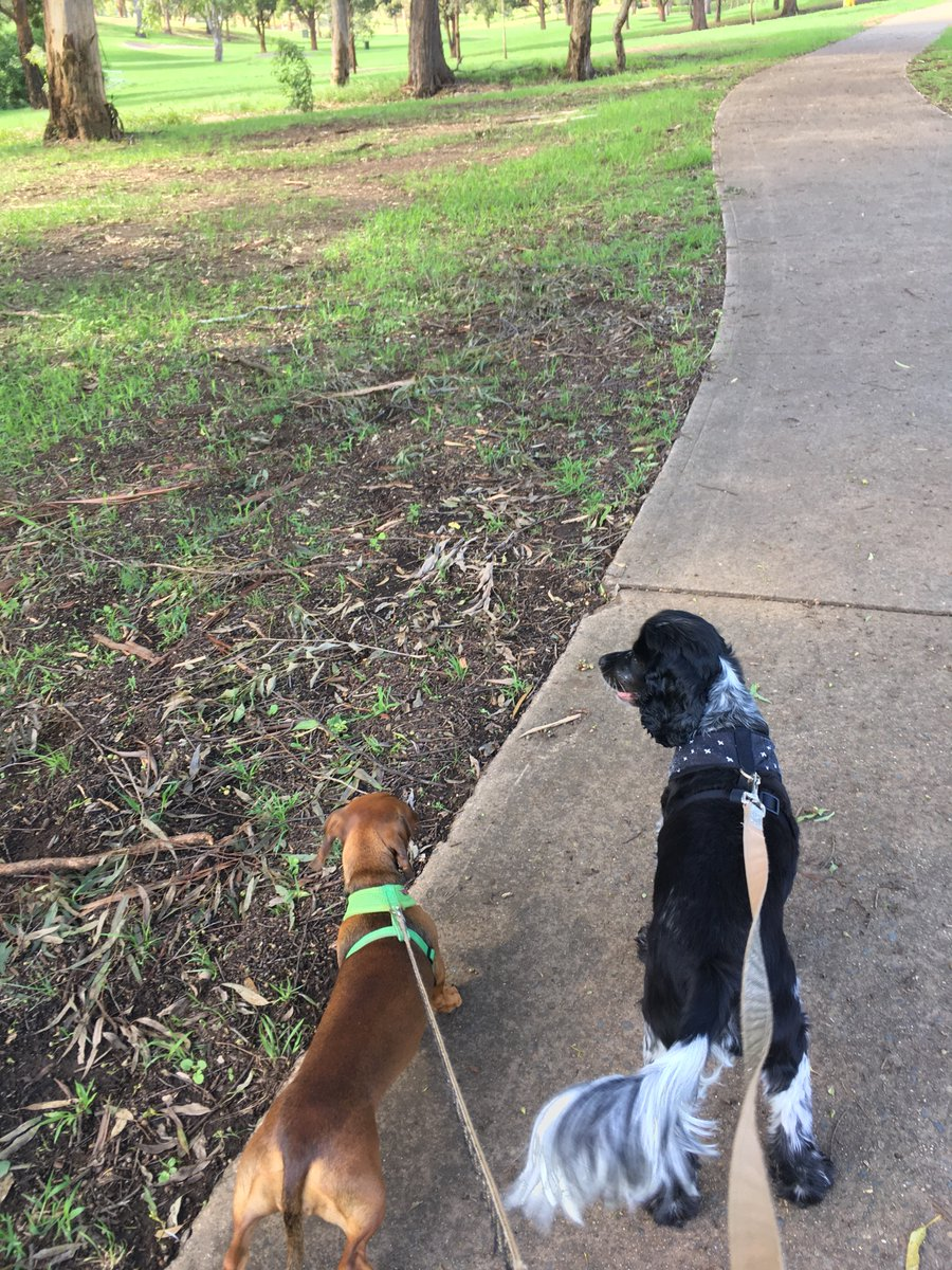 A good walk in the park with these guys is still the best way to unwind after a long week...