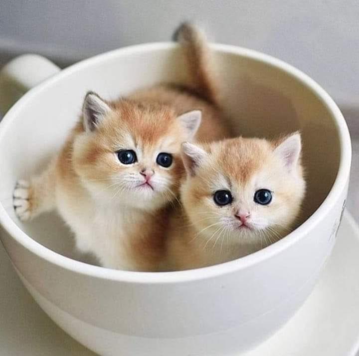 картинка доброе утро с котятами с настоящими котятами запоминающейся деталью красивого