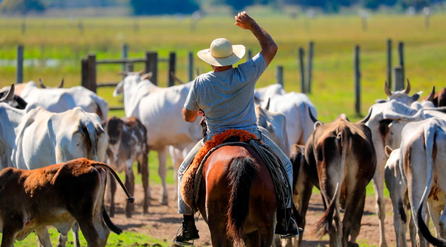 Brasil abateu 8,04 milhões de cabeças de gado a menos no último trimestre; redução é de 1,8%, aponta @ibgecomunica  Saiba mais: http://www.norteagropecuario.com.br #NorteAgroTO #agropecuária #agronegócio #pecuária #pecuáriadecorte #abatedebovinos #bovinocultura #gado #IBGE #carnebovinapic.twitter.com/DWCsT1ygHn